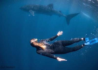 Elyssa swimming with a whale shark