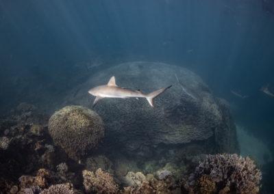 Amazing marine life, Coral Bay