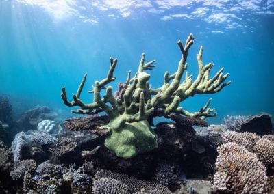Coral, Coral Bay