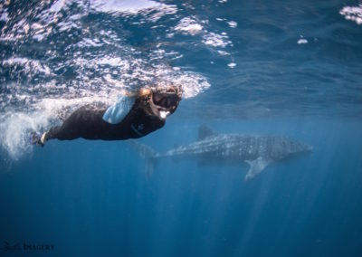 Elyssa and the whale shark