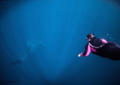 Tammie swimming with a whale shark